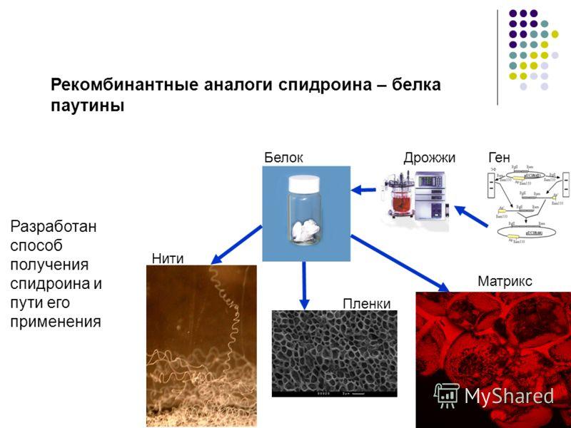 14 Рекомбинантные аналоги спидроина – белка паутины Разработан способ получения спидроина и пути его применения БелокДрожжиГен Нити Пленки Матрикс