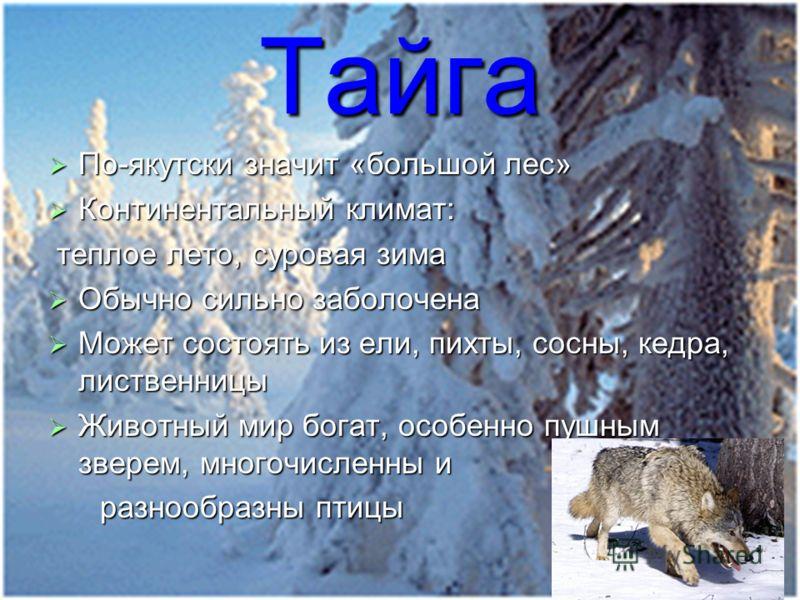Тайга По-якутски значит «большой лес» По-якутски значит «большой лес» Континентальный климат: Континентальный климат: теплое лето, суровая зима теплое лето, суровая зима Обычно сильно заболочена Обычно сильно заболочена Может состоять из ели, пихты,