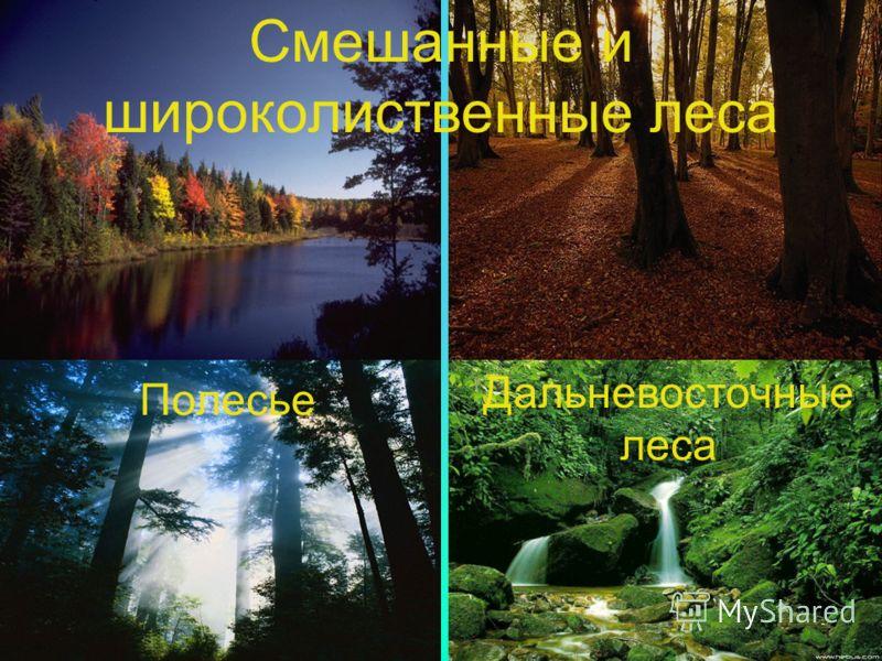 Смешанные и широколиственные леса Полесье Дальневосточные леса
