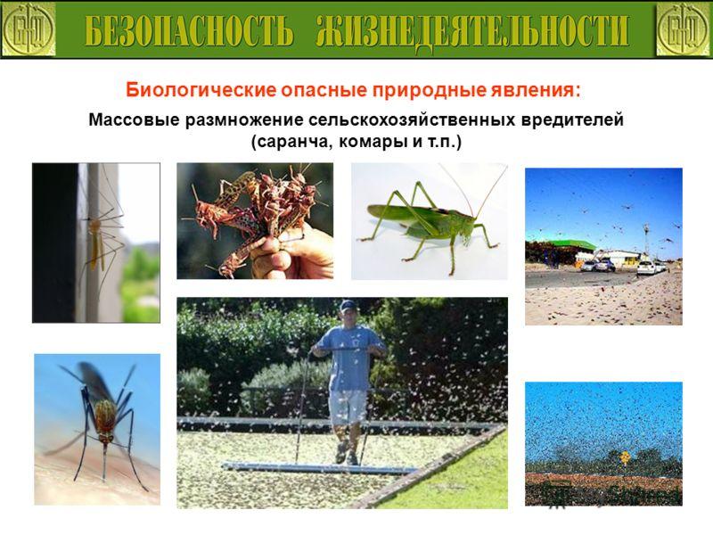 Биологические опасные природные явления: Массовые размножение сельскохозяйственных вредителей (саранча, комары и т.п.)