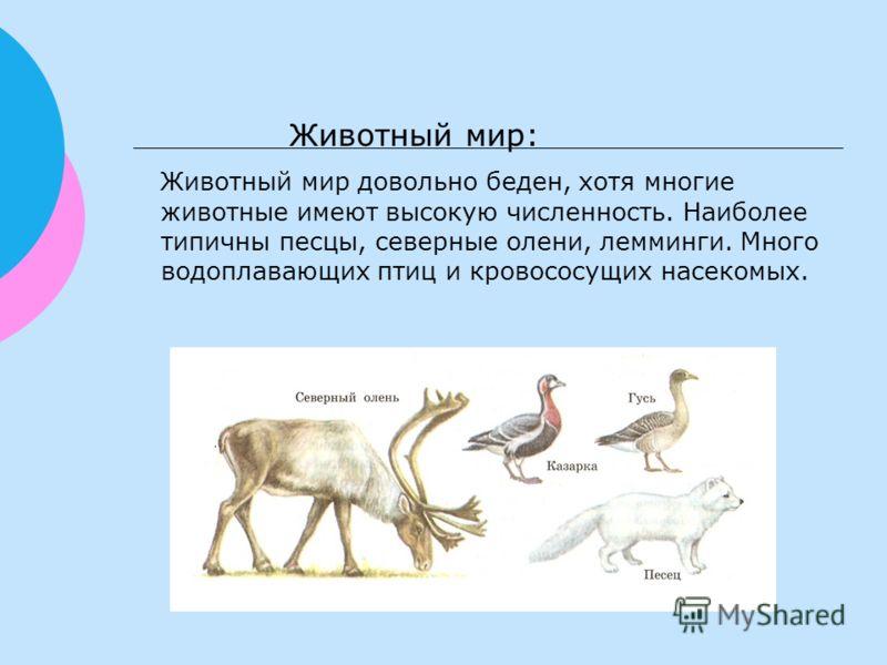 Животный мир: Животный мир довольно беден, хотя многие животные имеют высокую численность. Наиболее типичны песцы, северные олени, лемминги. Много водоплавающих птиц и кровососущих насекомых.