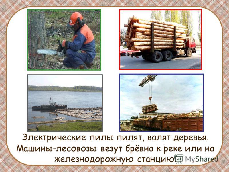 Электрические пилы пилят, валят деревья. Машины-лесовозы везут брёвна к реке или на железнодорожную станцию.