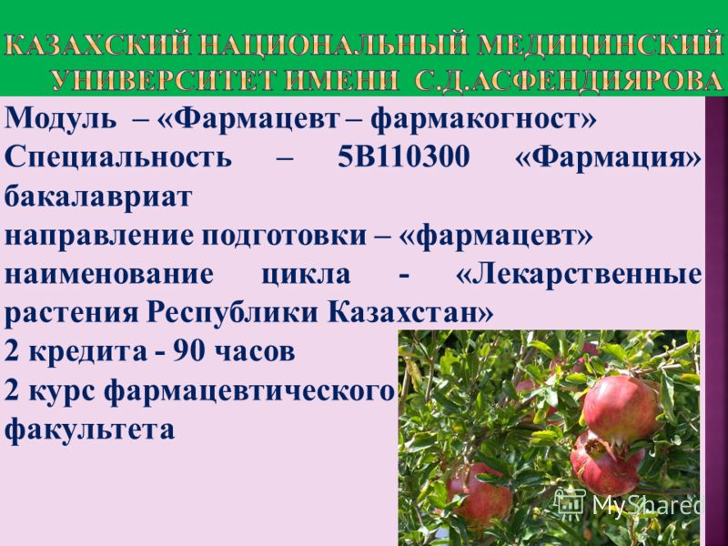 Модуль – «Фармацевт – фармакогност» Cпециальность – 5В110300 «Фармация» бакалавриат направление подготовки – «фармацевт» наименование цикла - «Лекарственные растения Республики Казахстан» 2 кредита - 90 часов 2 курс фармацевтического факультета