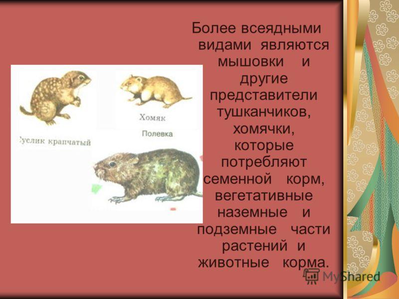 Более всеядными видами являются мышовки и другие представители тушканчиков, хомячки, которые потребляют семенной корм, вегетативные наземные и подземные части растений и животные корма.