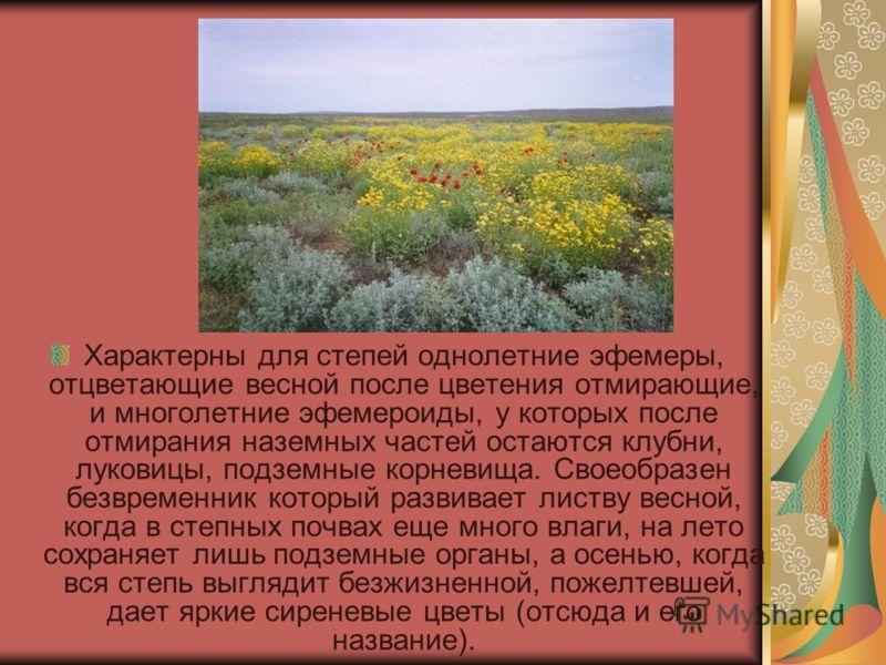 Характерны для степей однолетние эфемеры, отцветающие весной после цветения отмирающие, и многолетние эфемероиды, у которых после отмирания наземных частей остаются клубни, луковицы, подземные корневища. Своеобразен безвременник который развивает лис