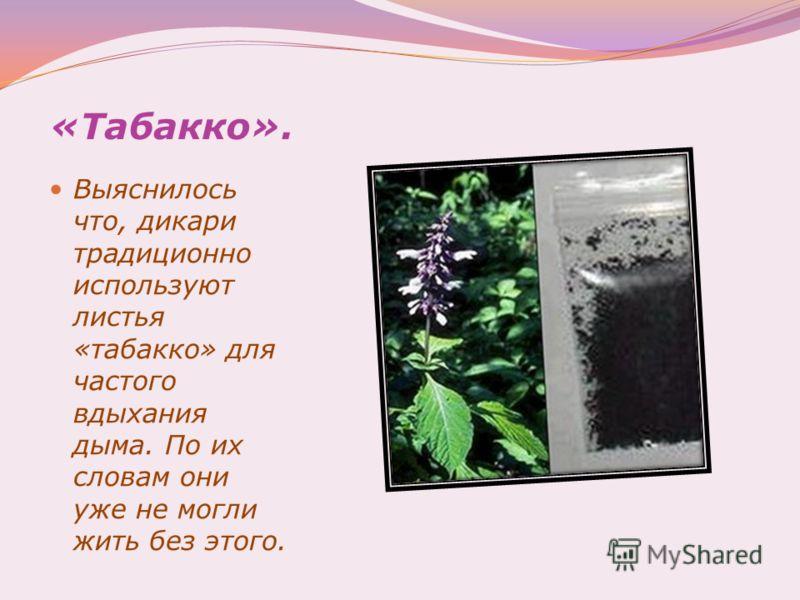 «Табакко». Выяснилось что, дикари традиционно используют листья «табакко» для частого вдыхания дыма. По их словам они уже не могли жить без этого.