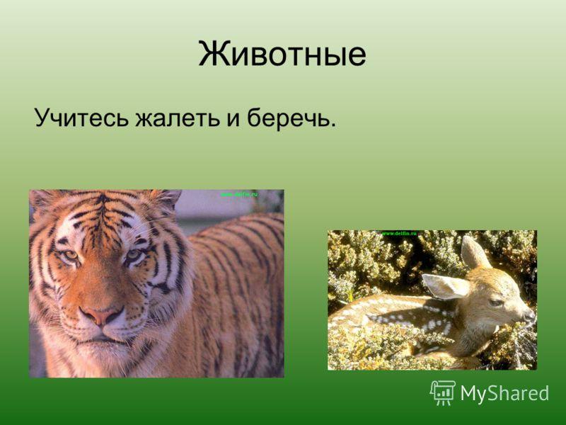 Животные Учитесь жалеть и беречь.