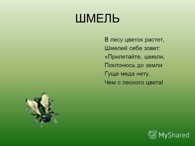 ШМЕЛЬ В лесу цветок растет, Шмелей себе зовет: «Прилетайте, шмели, Поклонюсь до земли Гуще меда нету, Чем с лесного цвета!