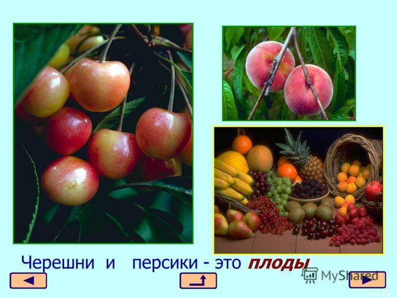 13 из 13 Черешни и персики - это плоды