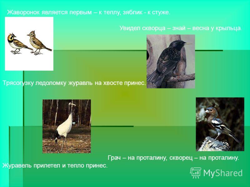 Жаворонок является первым – к теплу, зяблик - к стуже. Журавель прилетел и тепло принес. Увидел скворца – знай – весна у крыльца. Трясогузку ледоломку журавль на хвосте принес. Грач – на проталину, скворец – на проталину.