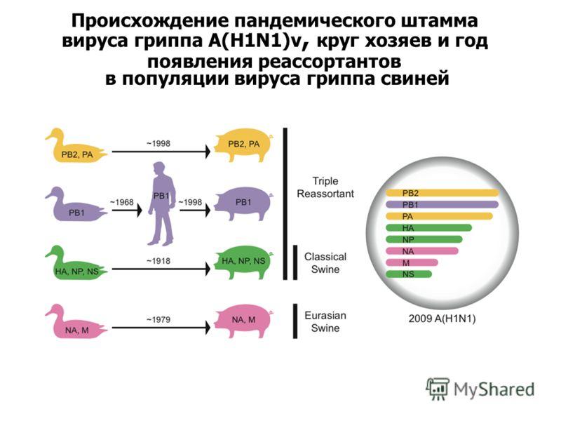 Происхождение пандемического штамма вируса гриппа A(H1N1)v, круг хозяев и год появления реассортантов в популяции вируса гриппа свиней