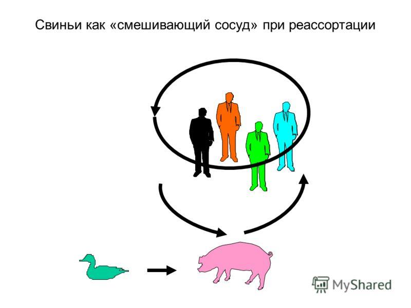 Свиньи как «смешивающий сосуд» при реассортации