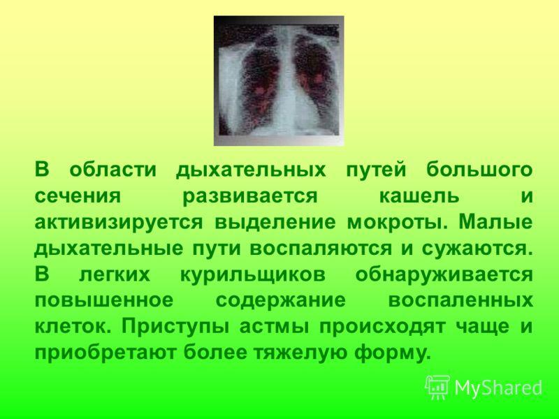 В области дыхательных путей большого сечения развивается кашель и активизируется выделение мокроты. Малые дыхательные пути воспаляются и сужаются. В легких курильщиков обнаруживается повышенное содержание воспаленных клеток. Приступы астмы происходят