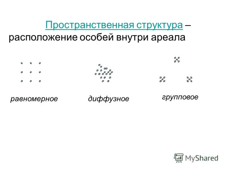 Пространственная структура – расположение особей внутри ареалаПространственная структура равномерноедиффузное групповое
