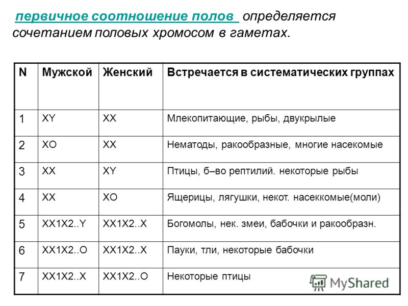 первичное соотношение полов определяется сочетанием половых хромосом в гаметах. первичное соотношение полов NМужскойЖенскийВстречается в систематических группах 1 XYXXМлекопитающие, рыбы, двукрылые 2 XOXXНематоды, ракообразные, многие насекомые 3 XXX