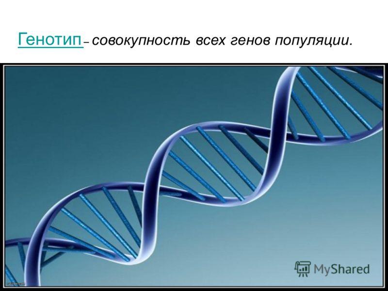 Генотип Генотип – совокупность всех генов популяции.