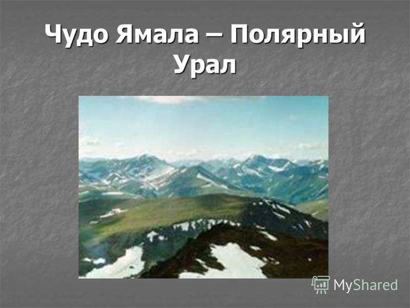 Чудо Ямала – Полярный Урал