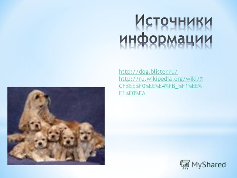 Китайская хохлатая собачка порода декоративных миниатюрных собак. Другое название - китайская голая собачка. Известна с древнейших времен. Собачка этой породы когда-то была мутантом, родившимся без шерсти. С абсолютной уверенностью невозможно утвержд
