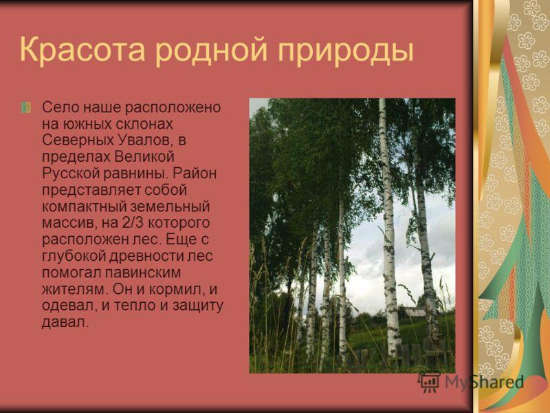 Красота родной природы Село наше расположено на южных склонах Северных Увалов, в пределах Великой Русской равнины. Район представляет собой компактный земельный массив, на 2/3 которого расположен лес. Еще с глубокой древности лес помогал павинским жи