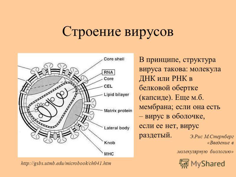 Строение вирусов В принципе, структура вируса такова: молекула ДНК или РНК в белковой обертке (капсиде). Еще м.б. мембрана; если она есть – вирус в оболочке, если ее нет, вирус раздетый. http://gsbs.utmb.edu/microbook/ch041.htm Э.Рис М.Стернберг «Вве