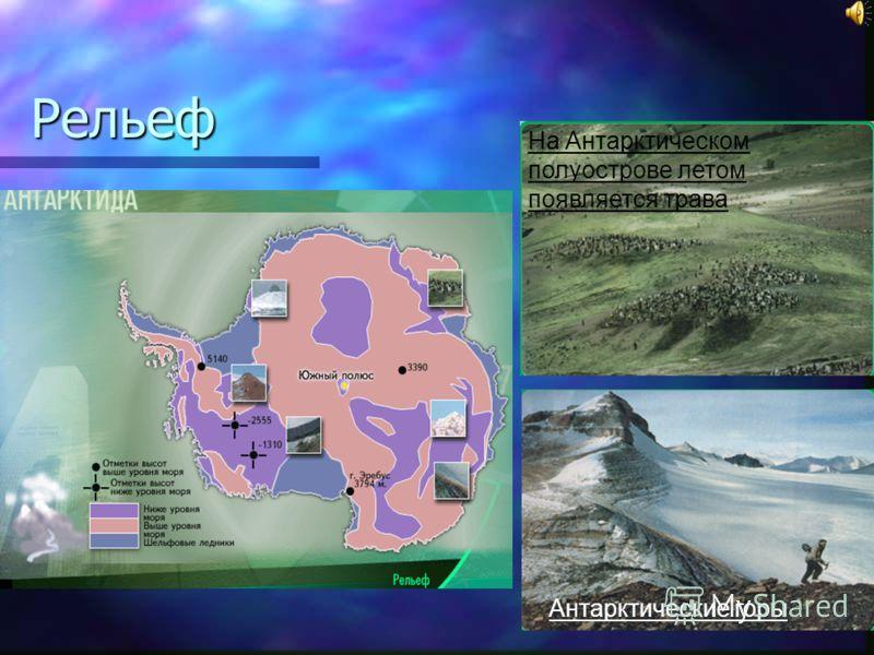 Рельеф На Антарктическом полуострове летом появляется трава Антарктические горы