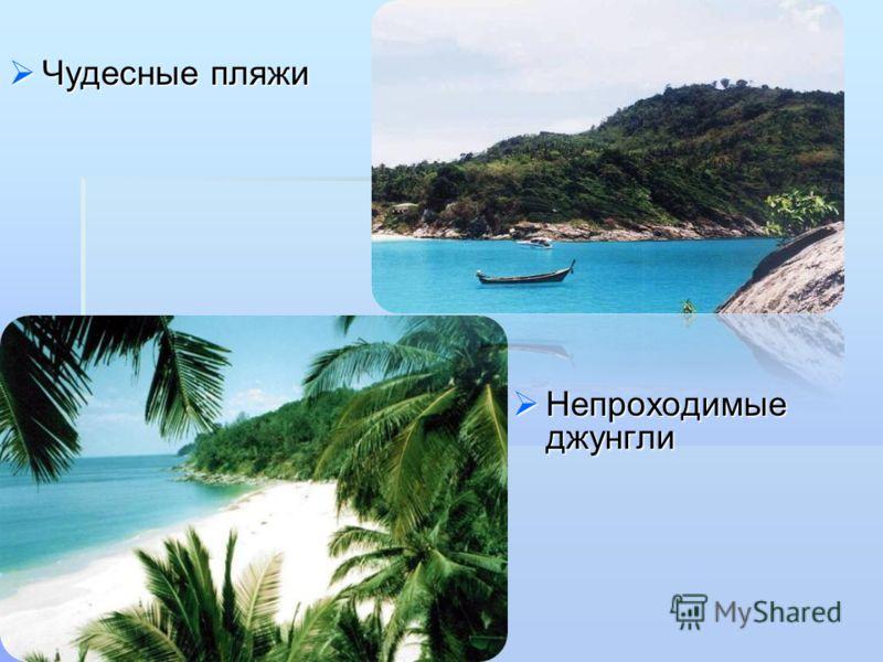 Чудесные пляжи Чудесные пляжи Непроходимые джунгли Непроходимые джунгли