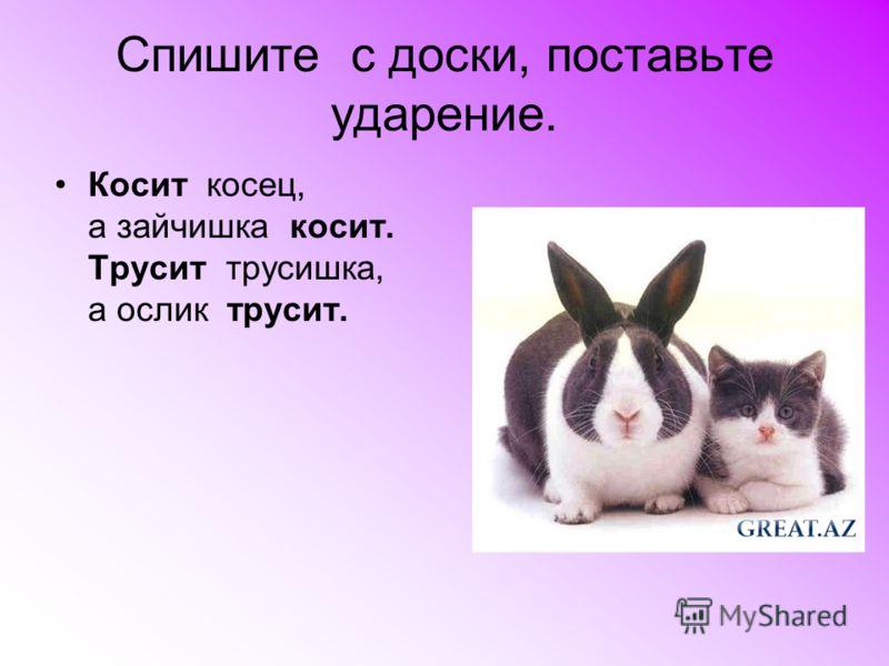 Спишите с доски, поставьте ударение. Косит косец, а зайчишка косит. Трусит трусишка, а ослик трусит.