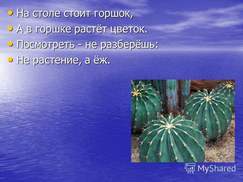 На столе стоит горшок, На столе стоит горшок, А в горшке растёт цветок. А в горшке растёт цветок. Посмотреть - не разберёшь: Посмотреть - не разберёшь: Не растение, а ёж. Не растение, а ёж.