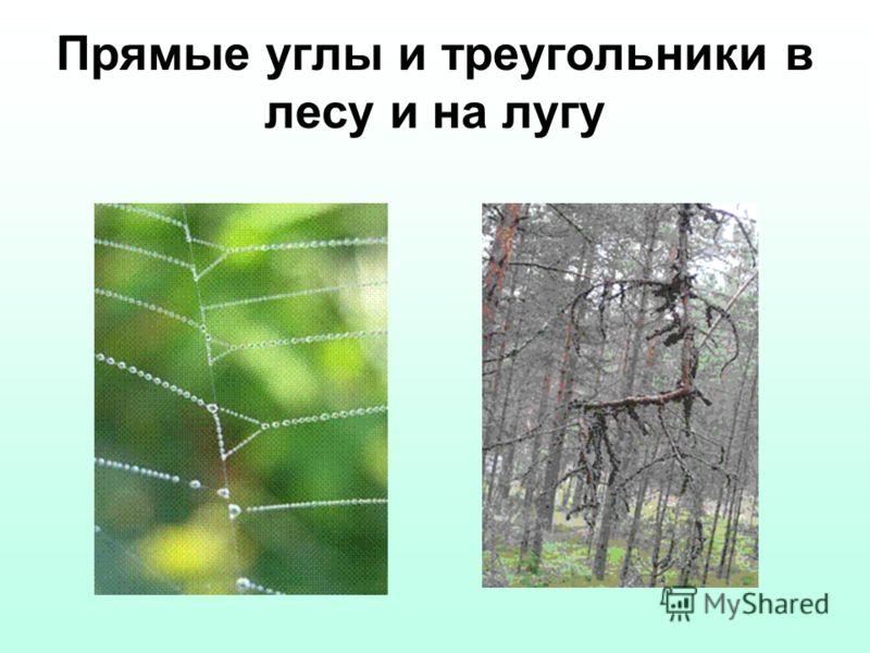 Прямые углы и треугольники в лесу и на лугу
