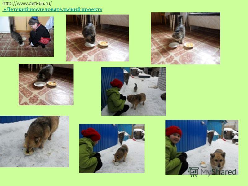 1. Кошке в одну тарелку положила чипсы, а в другую- вареный рис. http://www.deti-66.ru/ « Детский исследовательский проект »