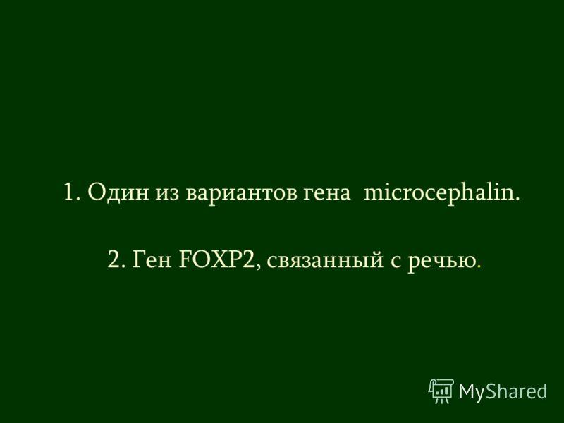 1. Один из вариантов гена microcephalin. 2. Ген FOXP2, связанный с речью.