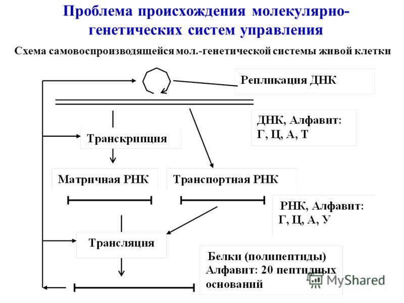 Проблема происхождения молекулярно- генетических систем управления Схема самовоспроизводящейся мол.-генетической системы живой клетки