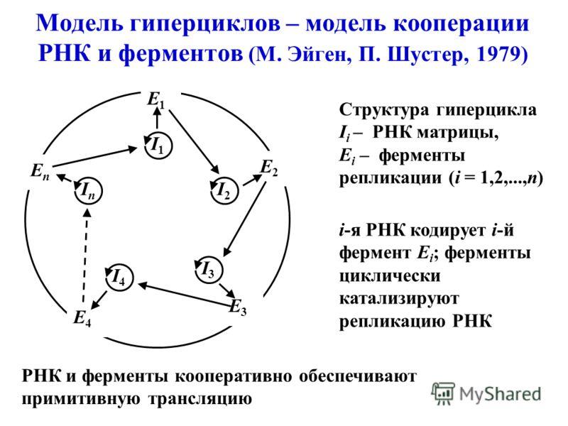 Модель гиперциклов – модель кооперации РНК и ферментов (М. Эйген, П. Шустер, 1979) Структура гиперцикла I i – РНК матрицы, E i – ферменты репликации (i = 1,2,...,n) I2I2 I1I1 InIn I4I4 I3I3 E2E2 E1E1 E4E4 E3E3 EnEn i-я РНК кодирует i-й фермент E i ;
