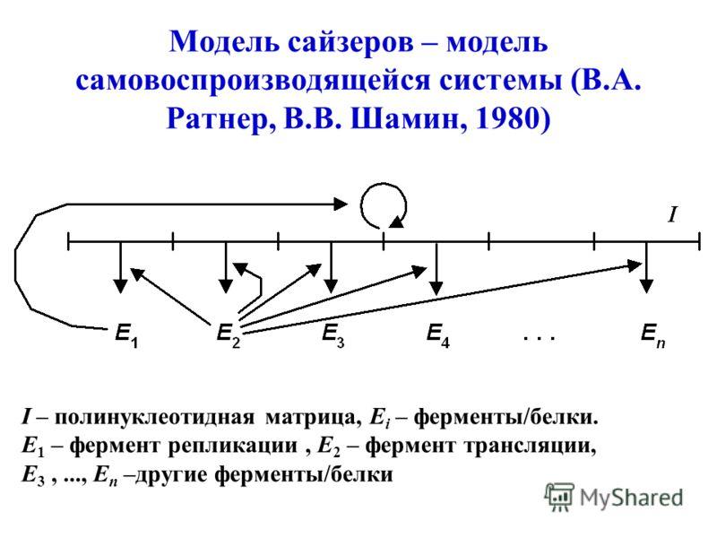 Модель сайзеров – модель самовоспроизводящейся системы (В.А. Ратнер, В.В. Шамин, 1980) I – полинуклеотидная матрица, E i – ферменты/белки. E 1 – фермент репликации, E 2 – фермент трансляции, E 3,..., E n –другие ферменты/белки