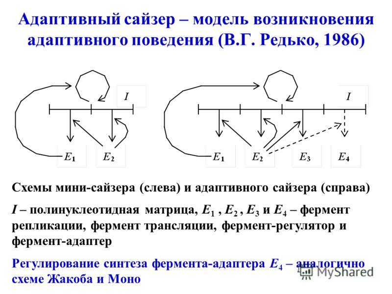 Адаптивный сайзер – модель возникновения адаптивного поведения (В.Г. Редько, 1986) Схемы мини-сайзера (слева) и адаптивного сайзера (справа) I – полинуклеотидная матрица, E 1, E 2, E 3 и E 4 – фермент репликации, фермент трансляции, фермент-регулятор