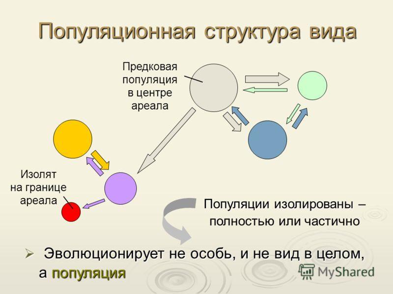 Популяционная структура вида Популяции изолированы Популяции изолированы – полностью или частично Эволюционирует не особь, и не вид в целом, а популяция Эволюционирует не особь, и не вид в целом, а популяция Предковая популяция в центре ареала Изолят
