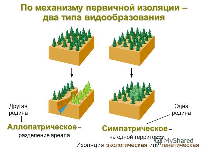 По механизму первичной изоляции – два типа видообразования Симпатрическое Симпатрическое – на одной территории экологическаягенетическая Изоляция экологическая или генетическая Другая родина Одна родина Аллопатрическое Аллопатрическое – разделение ар