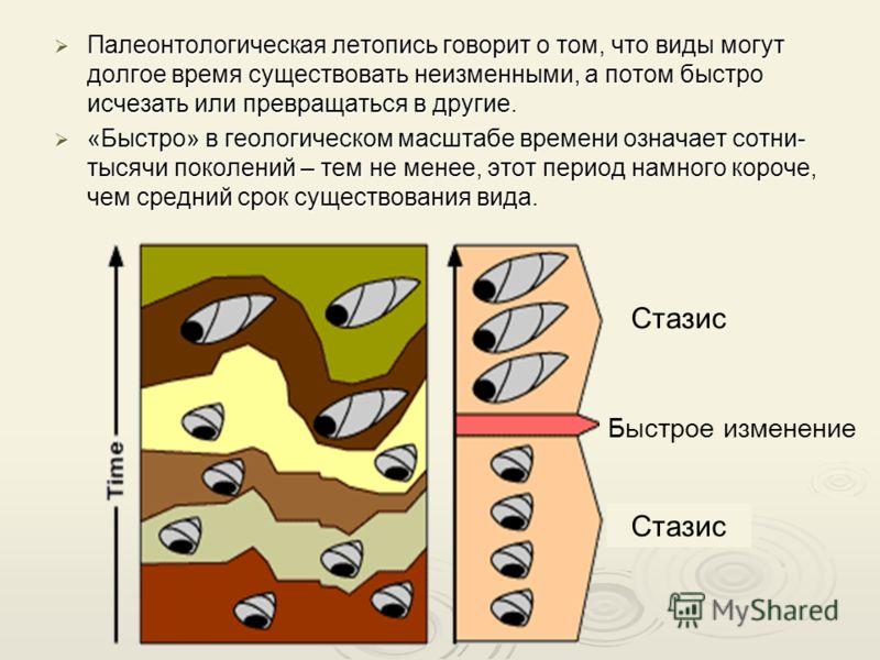 Палеонтологическая летопись говорит о том, что виды могут долгое время существовать неизменными, а потом быстро исчезать или превращаться в другие. Палеонтологическая летопись говорит о том, что виды могут долгое время существовать неизменными, а пот