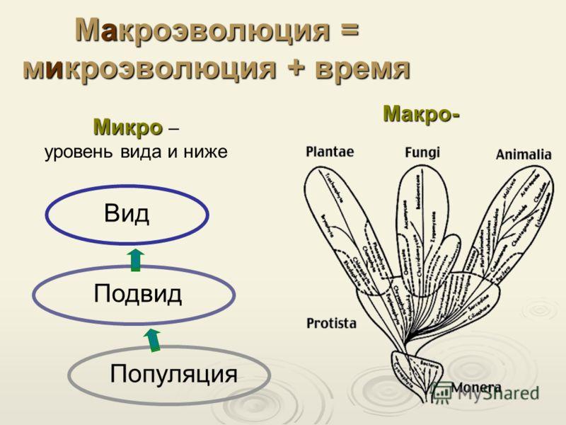 Макроэволюция = микроэволюция + время Популяция Подвид Вид Микро Микро – уровень вида и ниже Макро-