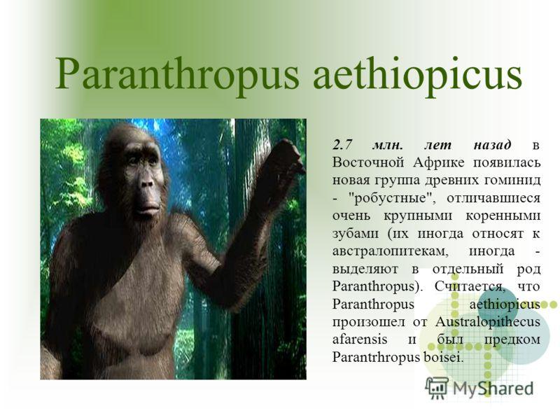 Paranthropus aethiopicus 2.7 млн. лет назад в Восточной Африке появилась новая группа древних гоминид -