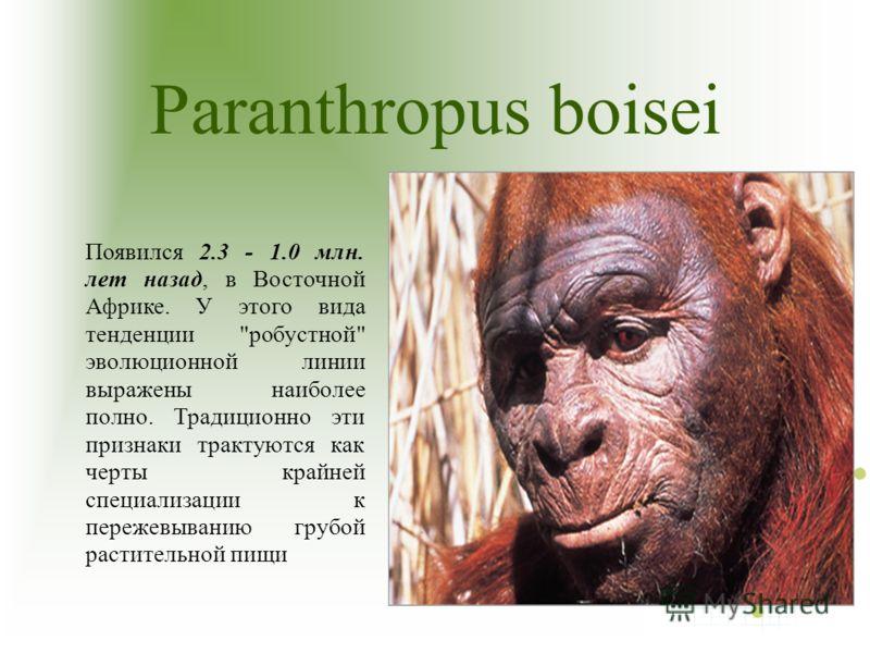 Paranthropus boisei Появился 2.3 - 1.0 млн. лет назад, в Восточной Африке. У этого вида тенденции