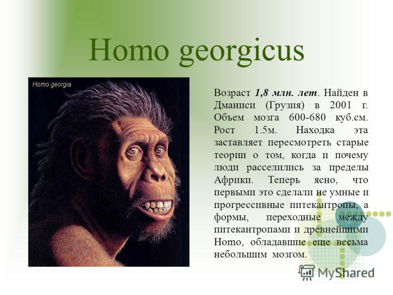 Homo georgicus Возраст 1,8 млн. лет. Найден в Дманиси (Грузия) в 2001 г. Объем мозга 600-680 куб.см. Рост 1.5м. Находка эта заставляет пересмотреть старые теории о том, когда и почему люди расселились за пределы Африки. Теперь ясно, что первыми это с