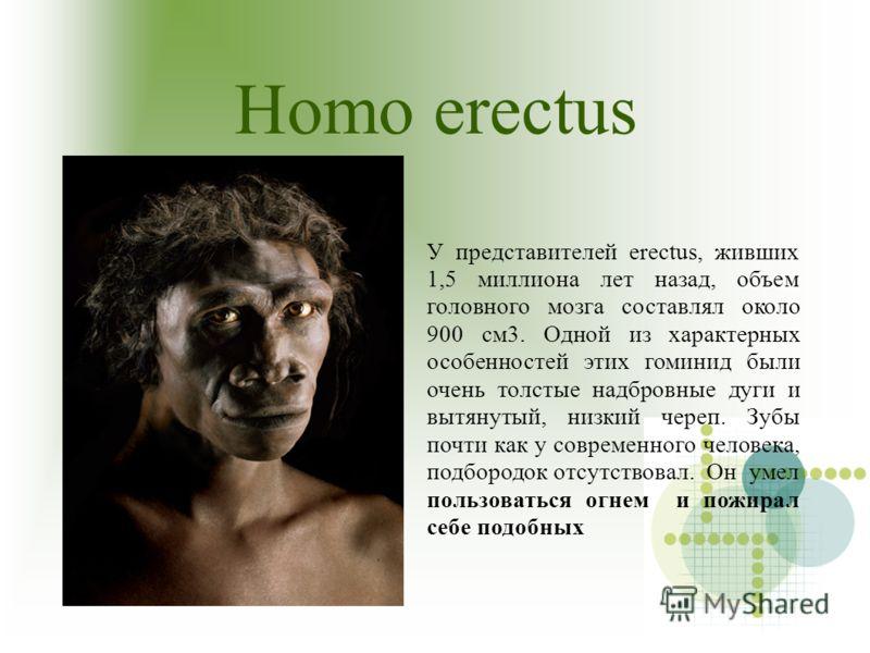 Homo erectus У представителей erectus, живших 1,5 миллиона лет назад, объем головного мозга составлял около 900 см3. Одной из характерных особенностей этих гоминид были очень толстые надбровные дуги и вытянутый, низкий череп. Зубы почти как у совреме
