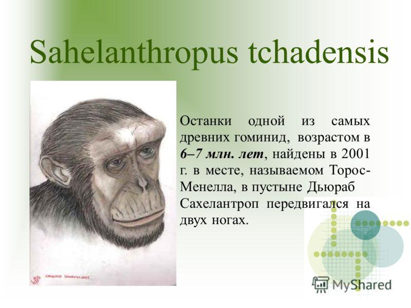 Sahelanthropus tchadensis. Останки одной из самых древних гоминид, возрастом в 6–7 млн. лет, найдены в 2001 г. в месте, называемом Торос- Менелла, в пустыне Дьюраб Сахелантроп передвигался на двух ногах.