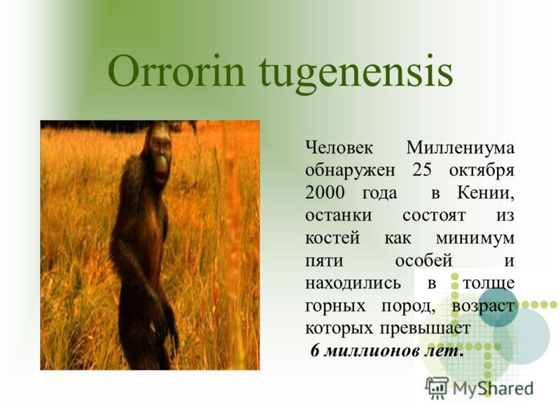 Orrorin tugenensis Человек Миллениума обнаружен 25 октября 2000 года в Кении, останки состоят из костей как минимум пяти особей и находились в толще горных пород, возраст которых превышает 6 миллионов лет.