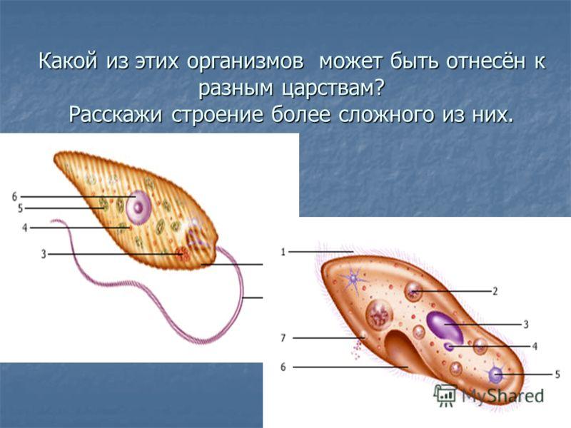 Какой из этих организмов может быть отнесён к разным царствам? Расскажи строение более сложного из них.