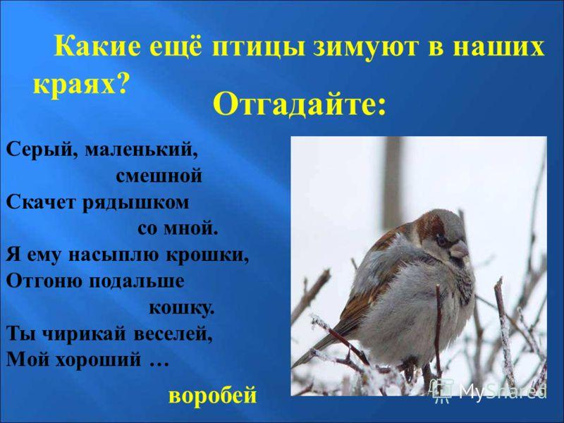 Отгадайте: Какие ещё птицы зимуют в наших краях? Серый, маленький, смешной Скачет рядышком со мной. Я ему насыплю крошки, Отгоню подальше кошку. Ты чирикай веселей, Мой хороший … воробей Отгадайте: какие ещё птицы зимуют в наших краях? Серый, маленьк