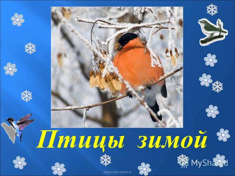 Птицы зимой papa-vlad.narod.ru