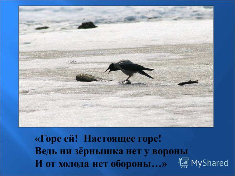 «Горе ей! Настоящее горе! Ведь ни зёрнышка нет у вороны И от холода нет обороны…» «Горе ей! Настоящее горе! Ведь ни зёрнышка нет у вороны и от холода нет обороны…»