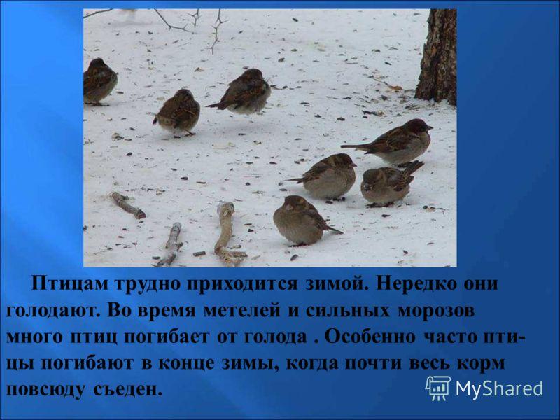 Птицам трудно приходится зимой. Нередко они голодают. Во время метелей и сильных морозов много птиц погибает от голода. Особенно часто пти- цы погибают в конце зимы, когда почти весь корм повсюду съеден. Птицам трудно приходится зимой. Нередко они го